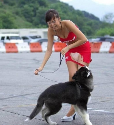 bad-bad-dog.jpg
